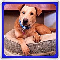 Adopt A Pet :: Wilbur - Tucson, AZ