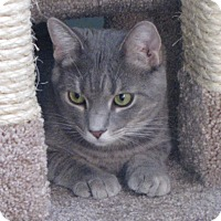 Adopt A Pet :: Ana - bloomfield, NJ