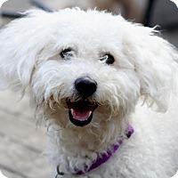 Adopt A Pet :: Pickens - Norwalk, CT