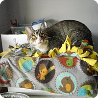 Adopt A Pet :: Mittens - Riverside, RI