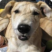 Adopt A Pet :: Malinda - Phoenix, AZ