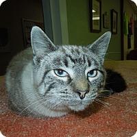 Adopt A Pet :: Cody - Medina, OH