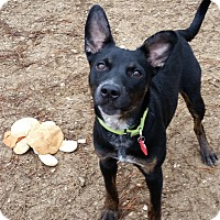 Adopt A Pet :: Jetta - Grayslake, IL