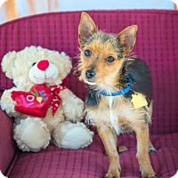 Adopt A Pet :: Owen - Fremont, CA