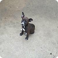 Adopt A Pet :: Hope meet me 6/3 - Manchester, CT