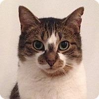 Adopt A Pet :: Boston - Toronto, ON