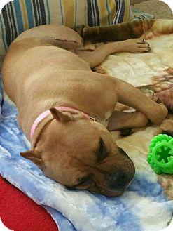 Terrier (Unknown Type, Medium) Mix Dog for adoption in Bridgewater, New Jersey - Georgia