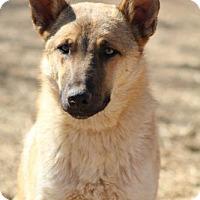 Adopt A Pet :: Baylee - Scottsdale, AZ
