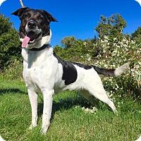 Adopt A Pet :: Cheyenne - Lafayette, NJ