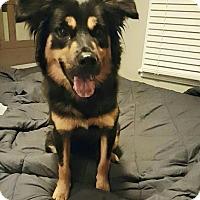 Adopt A Pet :: Nya - Kettering, OH