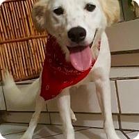 Adopt A Pet :: PABLO - Irvine, CA