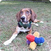 Adopt A Pet :: Cletus - Mocksville, NC