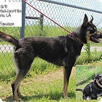 Adopt A Pet :: Frankie - Covington, LA