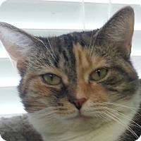 Adopt A Pet :: Caterpillar - Lexington, KY