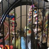 Adopt A Pet :: Luci & Desi - Punta Gorda, FL