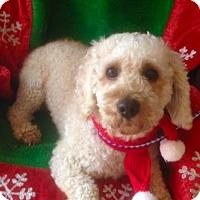 Adopt A Pet :: ANDRE - Irvine, CA