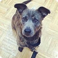 Adopt A Pet :: Talbot - Oak Park, IL