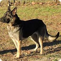 Adopt A Pet :: Dakota - Citrus Springs, FL