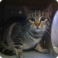 Adopt A Pet :: A659502 - Camarillo, CA