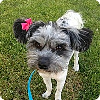 Adopt A Pet :: Candy - Encinitas, CA