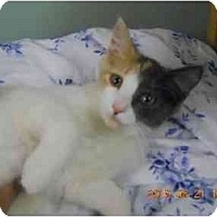 Adopt A Pet :: Oragami - Manalapan, NJ