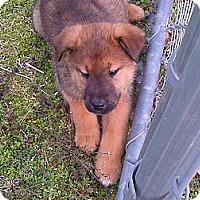 Adopt A Pet :: Winnie - Harrisburgh, PA