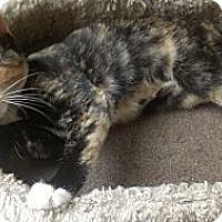 Adopt A Pet :: Jessica Biel - Richboro, PA