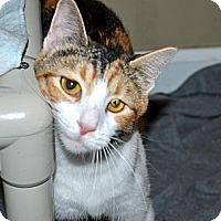 Adopt A Pet :: Cara - Xenia, OH
