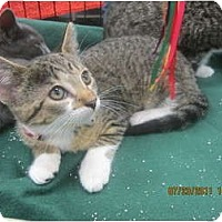 Adopt A Pet :: Jolee - Sterling Hgts, MI