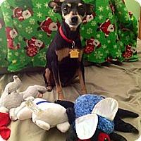 Adopt A Pet :: Roxy - Tustin, CA