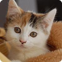 Adopt A Pet :: Gilda - Delmont, PA