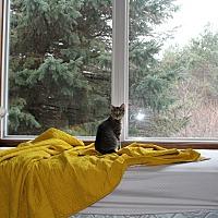 Adopt A Pet :: Cleo - Livonia, MI