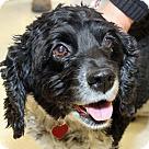 Adopt A Pet :: Darcy