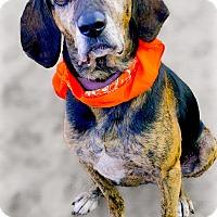 Adopt A Pet :: Marzeta sweetest gal - Sacramento, CA