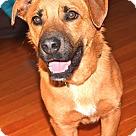 Adopt A Pet :: Rudy (RS)