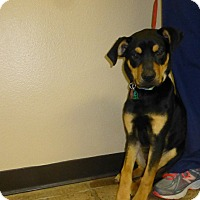 Adopt A Pet :: Hotrod - Oviedo, FL