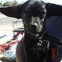 Adopt A Pet :: Stormee - El Paso, TX