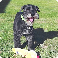 Adopt A Pet :: Sam Sam - Sharonville, OH