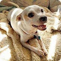 Adopt A Pet :: Sophia - Milpitas, CA
