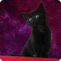 Adopt A Pet :: Eden - New Castle, PA