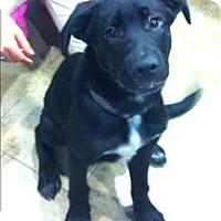 Adopt A Pet :: Benjamin - Duluth, MN