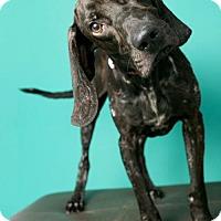 Adopt A Pet :: Banjo - Roanoke, VA