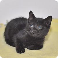 Adopt A Pet :: Wrangler - Medina, OH