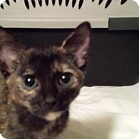 Adopt A Pet :: Myrtle - Clarkson, KY