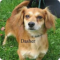 Adopt A Pet :: Dasher - Warren, PA