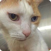 Adopt A Pet :: Parker - Hendersonville, NC
