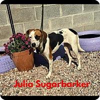 Adopt A Pet :: Julia Sugarbarker - Jackson, OH