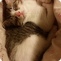 Adopt A Pet :: Stevie - Carencro, LA