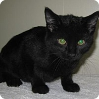 Adopt A Pet :: Tigger - Gary, IN