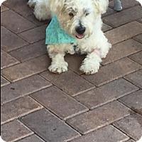Adopt A Pet :: FINNEGAN - Fort Lauderdale, FL